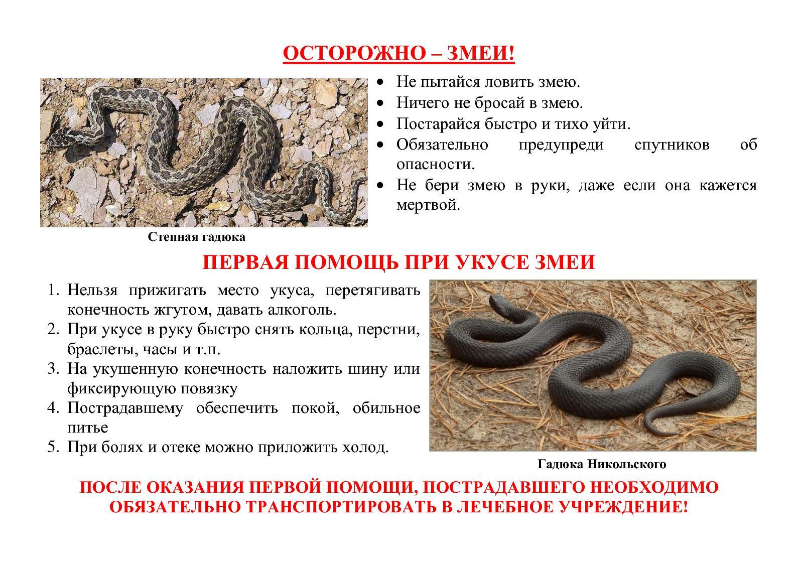 http://pozhva.permarea.ru/upload/versions/11639/11138/zmei.jpg